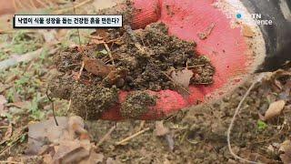 낙엽이 식물 성장을 돕…