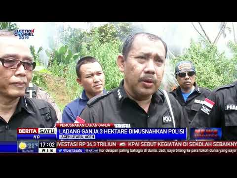 3 Hektare Ladang Ganja di Aceh Utara Dimusnahkan