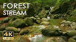 4K Forest Stream - Relaxing River Sounds - No Birds - Ultra HD Nature Video -  Relax/ Sleep/ Study