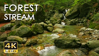 4K Forest Stream - Relaxing River Sounds - No Birds - Ultra HD Nature Video -  Relax/ Sleep/ Study thumbnail