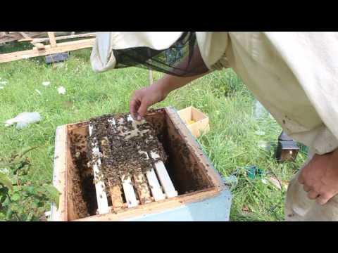 Весенняя в мае ловля пчел ловушками