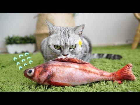 고양이에게 생선을 맡겨 보았습니다 - 선물개봉기6탄