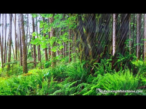 Forest Rain Sounds for Sleeping or Studying   10 Hours   Nature White Noise