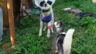 Варя супер собака !