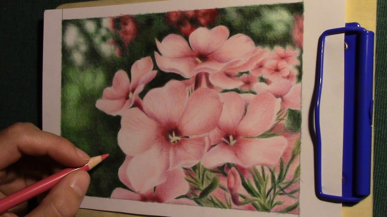 drawing pink phlox flowers with colored pencils - YouTube