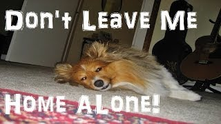 Don't Leave Your Dog Home Alone | My Shetland Sheepdog