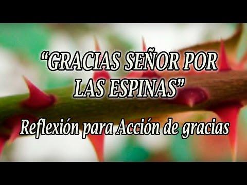 "Reflexión para Acción de gracias: ""Gracias Señor por las espinas"""