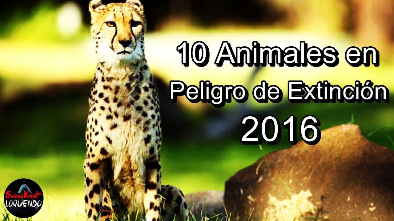 En Peligro De Extinción: 10 ANIMALES EN PELIGRO DE EXTINCIÓN