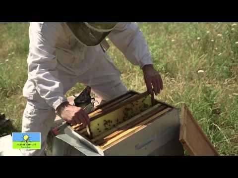 Le miel de Corse Filière Qualité Carrefour !