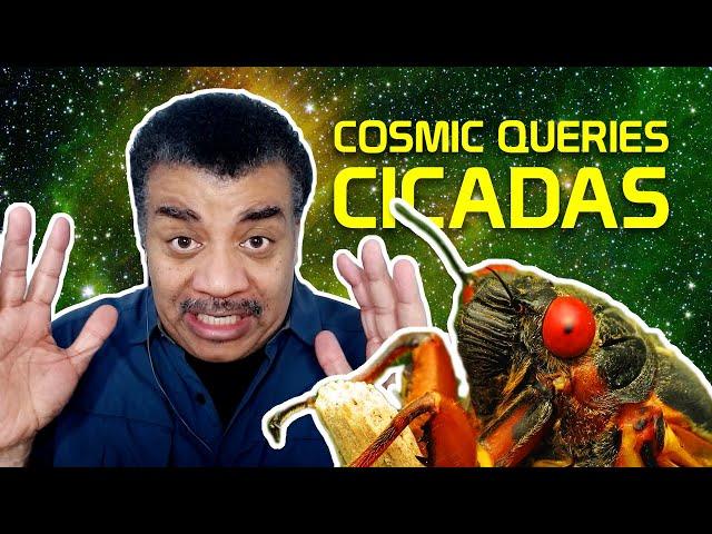 Cicada Invasion! With Jessica Ware - Cosmic Queries