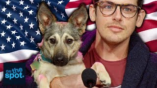 This Dog is Taking American Jobs - On The Spot | Rooster Teeth