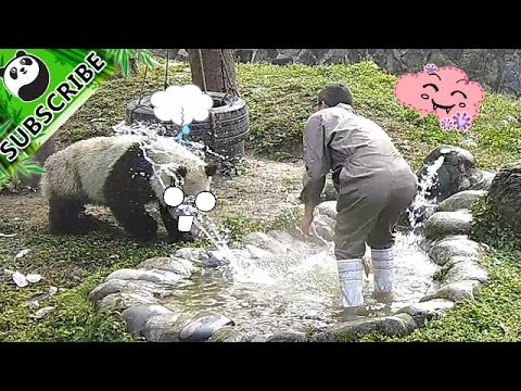 【Panda Top3】Poor Service! Where is Nanny's manager?