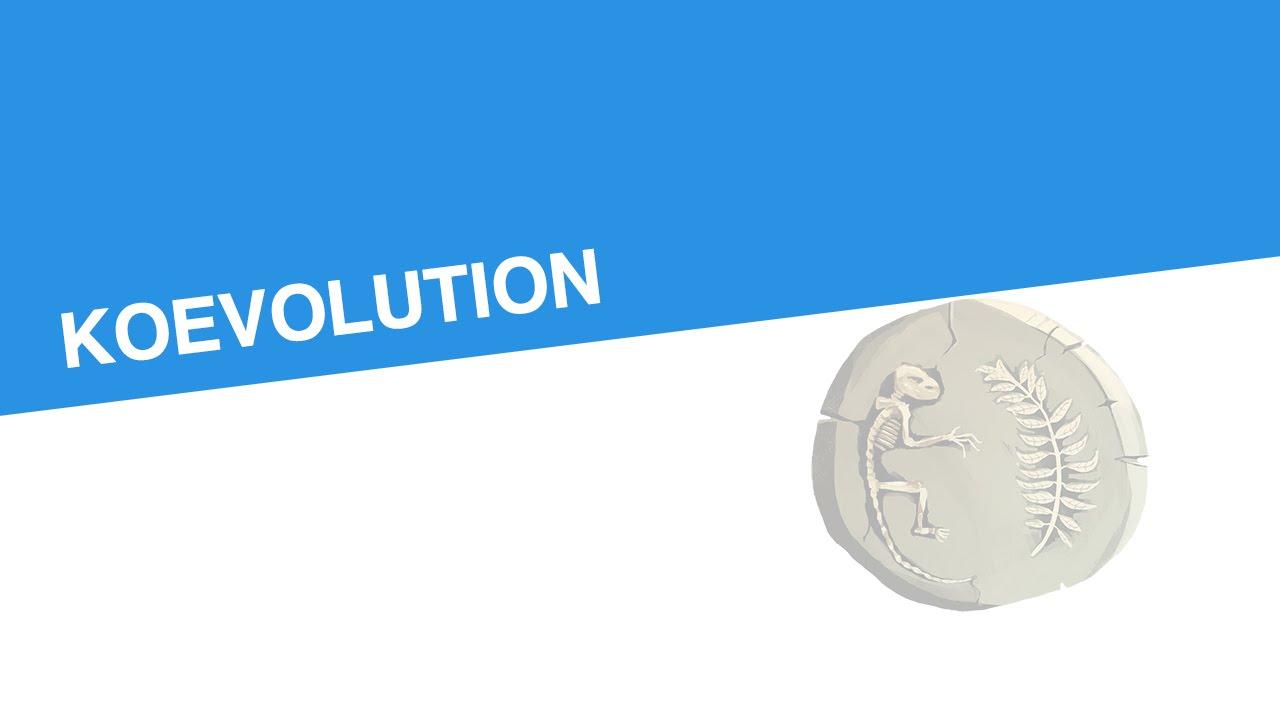 koevolution biologie evolutionsbiologie - Koevolution Beispiele