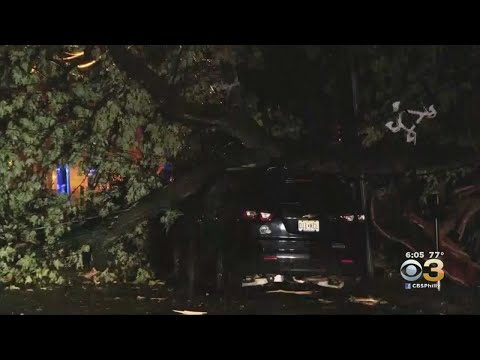 Cleanup Underway After Severe Storms Knock Down Trees, Cause Power Outages Across Region