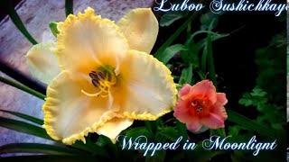 Цветочный калейдоскоп. Daylilies. Blumen. FLOWERS. Music. Чекалин. Красивая музыка надежды и весны.