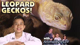 LEOPARD GECKOS! Pet Reptiles with EvanTubeHD & AnimalBytesTV!