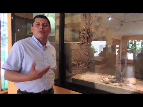 El Salvador Documental arqueológico (Ruinas de San Andrés y Joyas de Cerén)