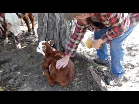 Cattle Rancher Has a Change of Heart | The Farmhouse Garden