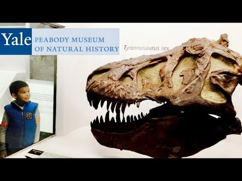 Yale Peabody Museum of Natural History | Jenny And Jay Vlogs