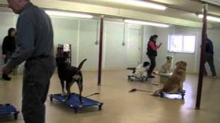Remote Collar Training Basic Dog Obedience