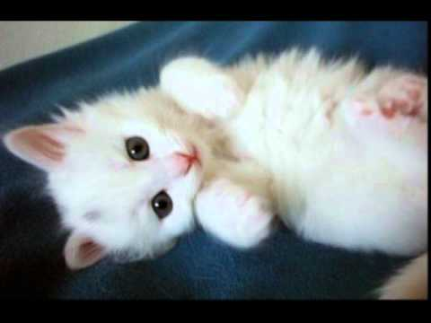 Gut bekannt chat drole et mignon - YouTube HP92