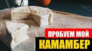 Домашний сыр из молока. Камамбер