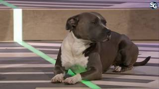 Jon Bernthal and Dog (Bam Bam): Ghost Recon Breakpoint - E3 2019
