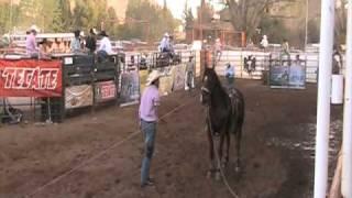 Rodeo de Santa Isabel 2010 Lazo de becerros www.caballo.tv