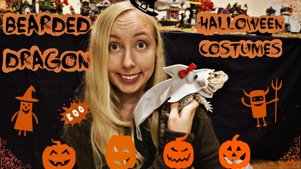 My Bearded Dragon Halloween Costumes  sc 1 st  YouTube & My Bearded Dragon Halloween Costumes - YouTube