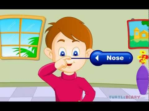 Learn all about the Five Senses at www.turtlediary.com