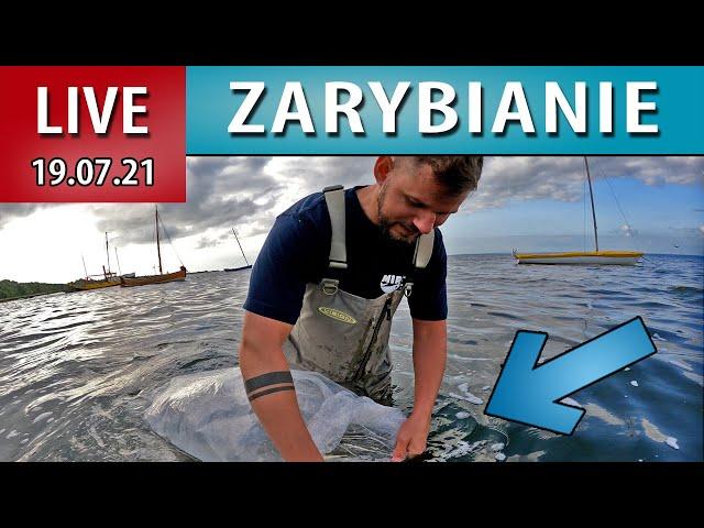 LIVE ➤ Zarybianie szczupakiem - Chałupy 10 metrów od brzegu