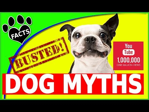 Mythbusters Dog Myths Busted