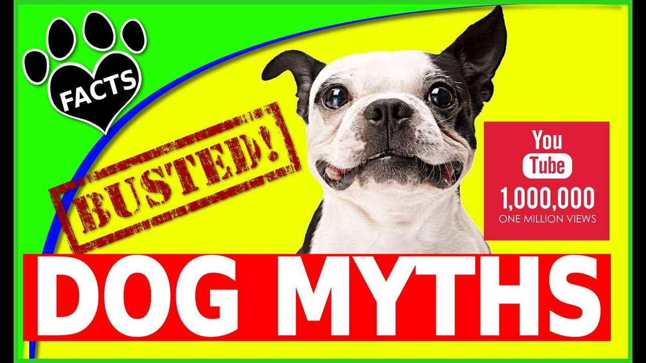 TopTenz: Dog Myths Busted (Debunked) - 1 Million Views on YouTube - Dogs 101 - Animal Facts