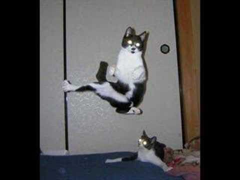 kittens portland oregon