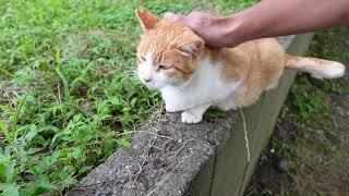塀の上によく喋る猫がいたのでナデナデしてきた