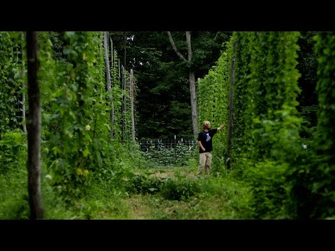 Scratch Brewing Company and the Art of Foraging