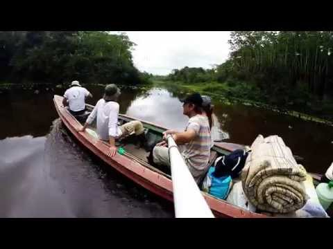 Trip to the Amazonian Jungle, Peru