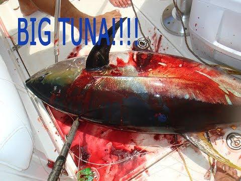Deep Sea Fishing for Yellowfin Tuna! Moorea & Bora Bora
