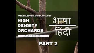 Watch | हिंदी | Part 2- Tree Selection and Plantation | High Density Orchard System