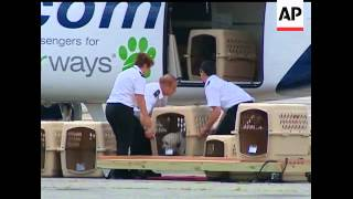 One Trip For Their Jack Russell Terrier In A Plane's Cargo Hold Was Enough To Convince Alysa Binder