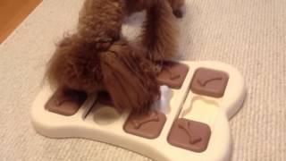 知育玩具「ドッグ・ブリック」で遊んだ動画だよ。 http://pet-smile.net...