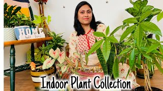 My Indoor Plant Tour and plant care tips