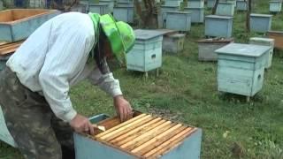 як зробити зимівник для бджіл безкоштовно