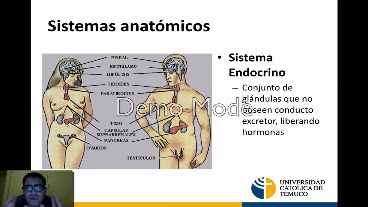 Terminologia Anatómica y Generalidades - YouTube