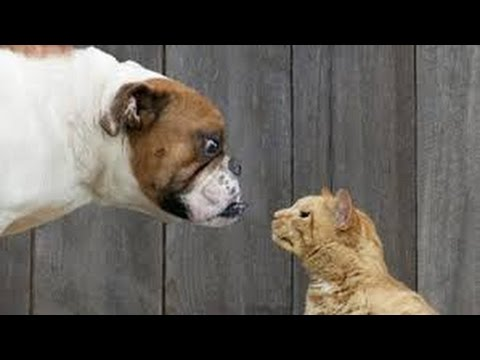 Why Are Cats Afraid Of Dogs