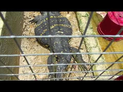 Bohol Python & Wildlife Park - Bohol Tours - WOW Philippines Travel Agency