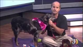 Pets on Parade 08 08 2015
