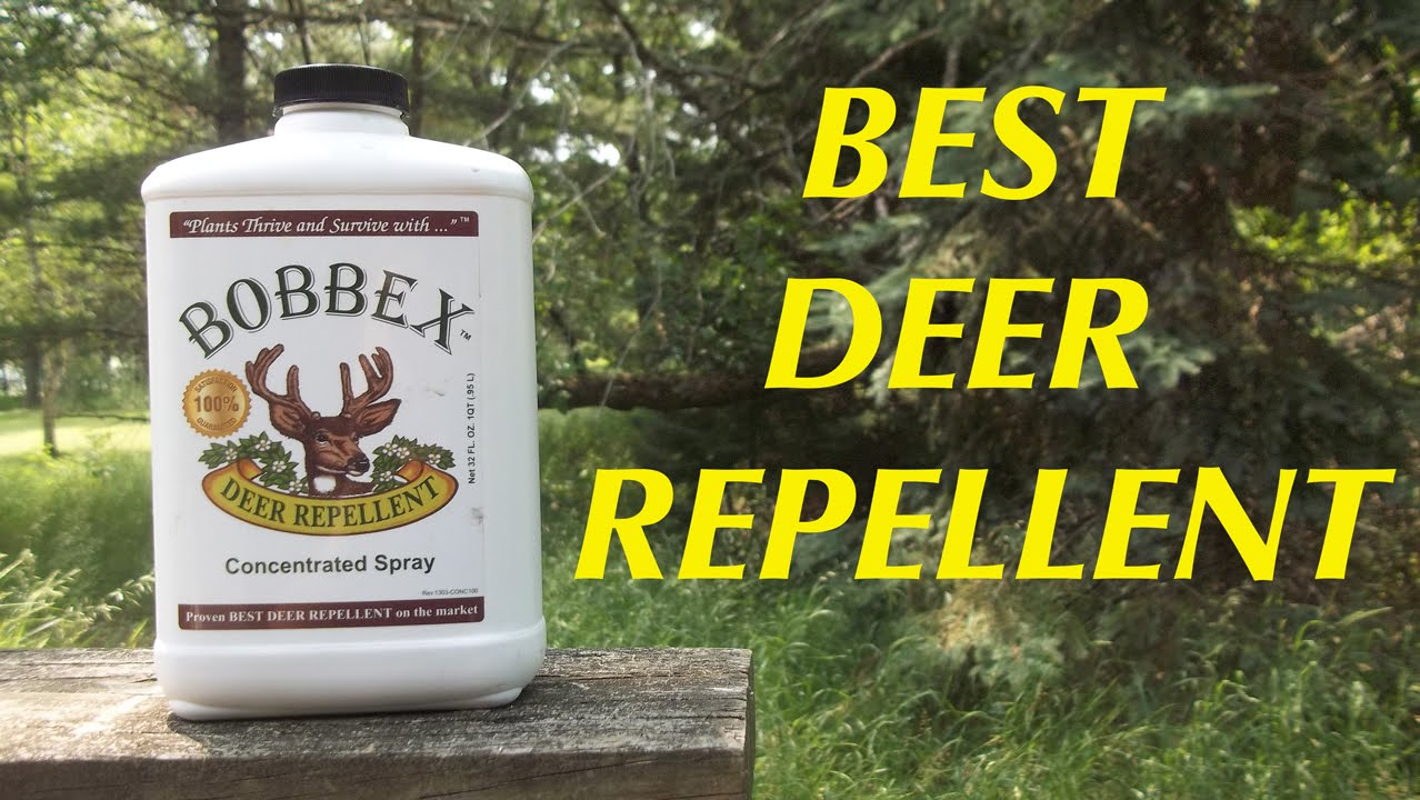 Bobbex The Best Deer Repellent And How To Deal With Trolls
