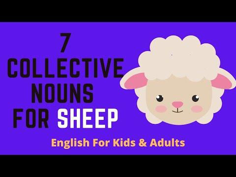 7 Collective Nouns For Sheep