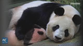 Tokyo's baby panda got a name!